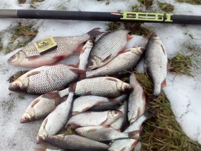 Ну и я вчера пару часиков посвятил реке ... | Отчеты о рыбалке в Беларуси