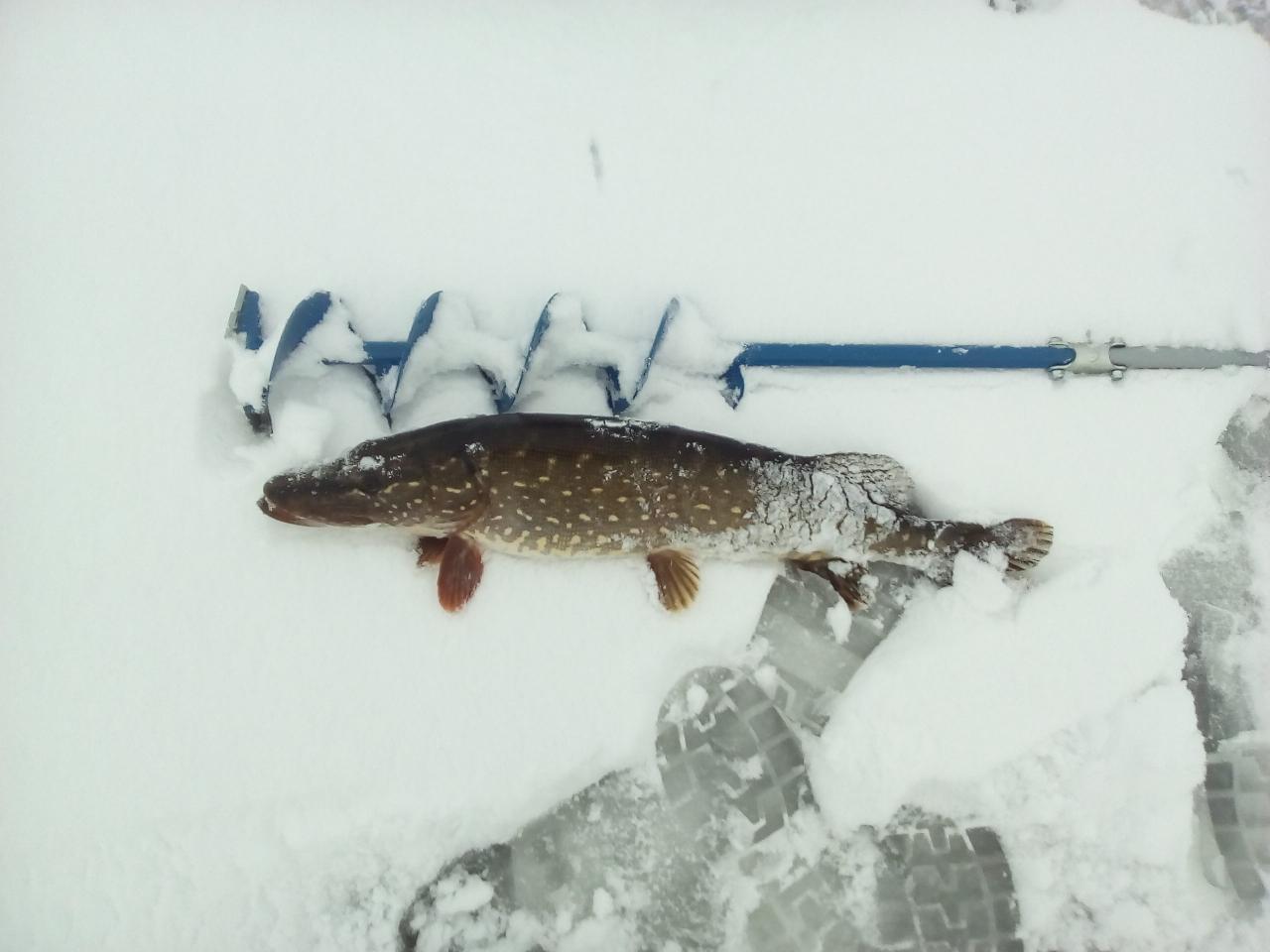 Сегодня был на сергеевичах. Лёд 4- 10 см ...   Отчеты о рыбалке в Беларуси