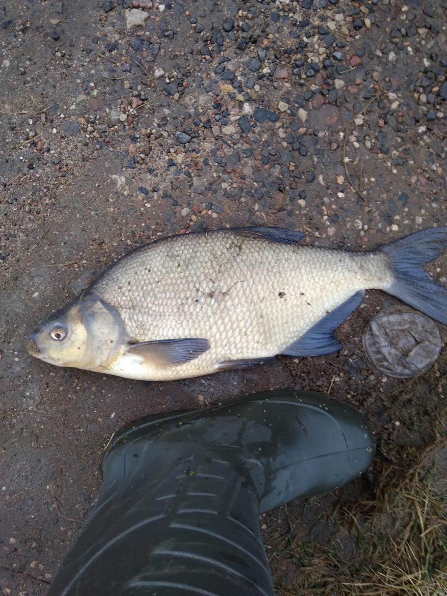 Сегодня решил попробовать плотву по ловить у семково ... | Отчеты о рыбалке в Беларуси