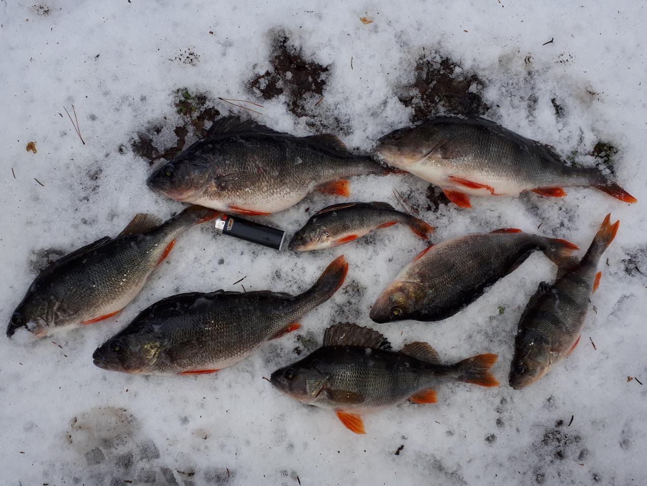 Снова вчера посетили сей водоем, погода с утра ... | Отчеты о рыбалке в Беларуси
