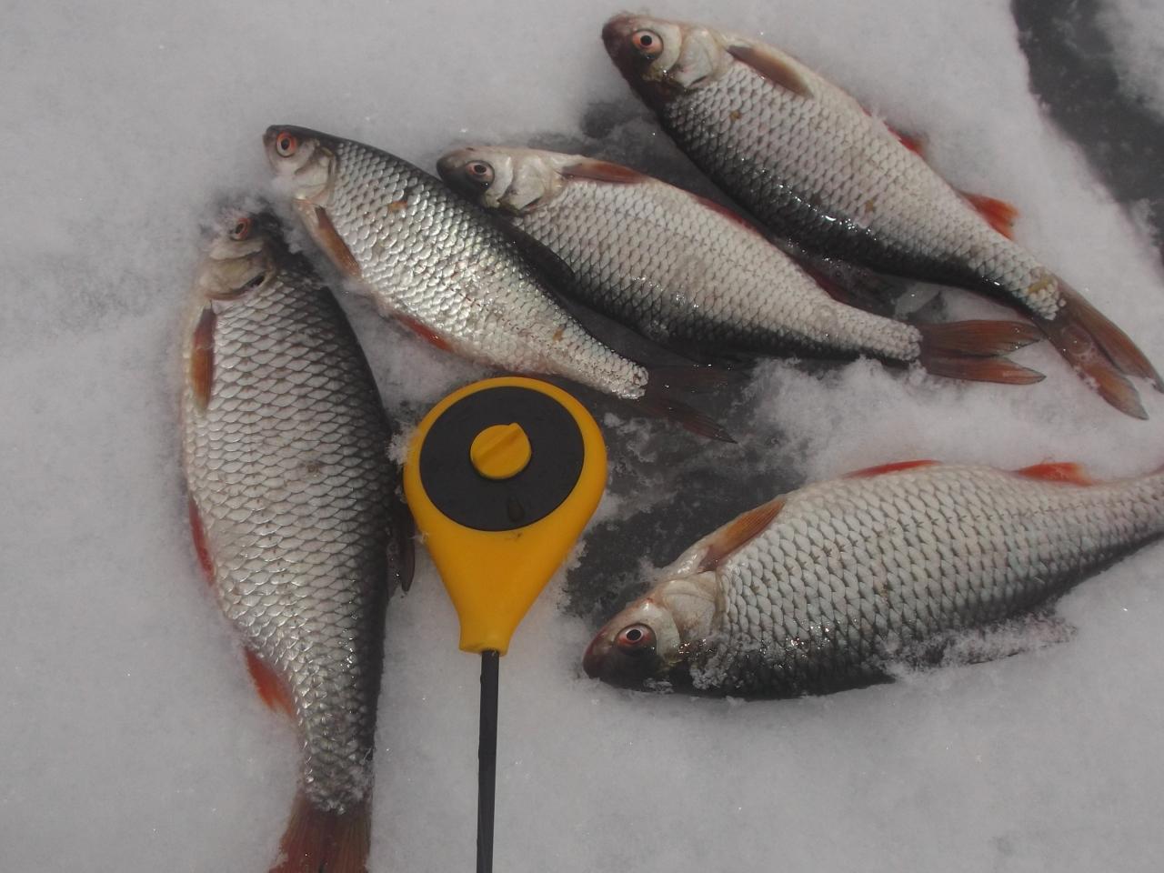 для начала я проспал,выйдя к машине узрел спущенное ... | Отчеты о рыбалке в Беларуси