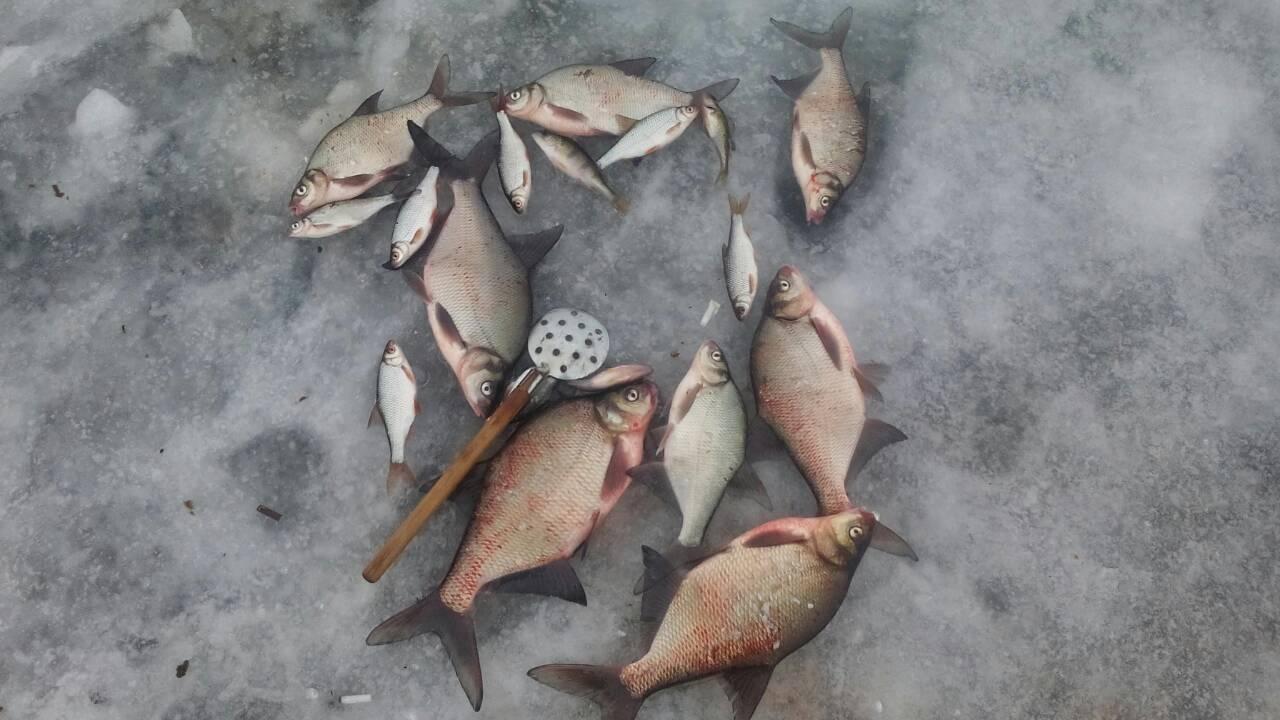 Доброго всем времени суток. Вчера с вечера пытался ... | Отчеты о рыбалке в Беларуси