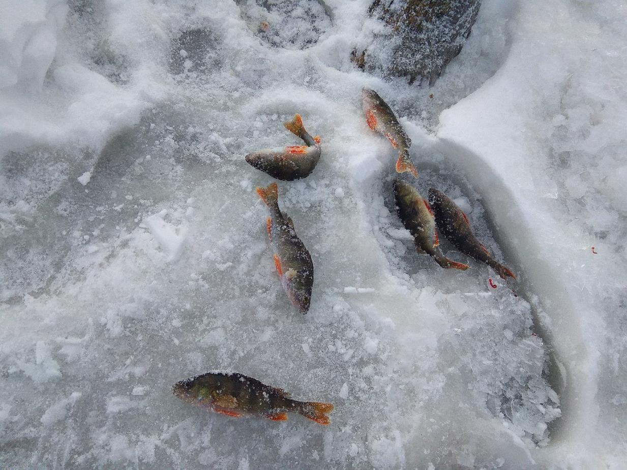 На этих выходных хотелось сгонять куда не будь ... | Отчеты о рыбалке в Беларуси