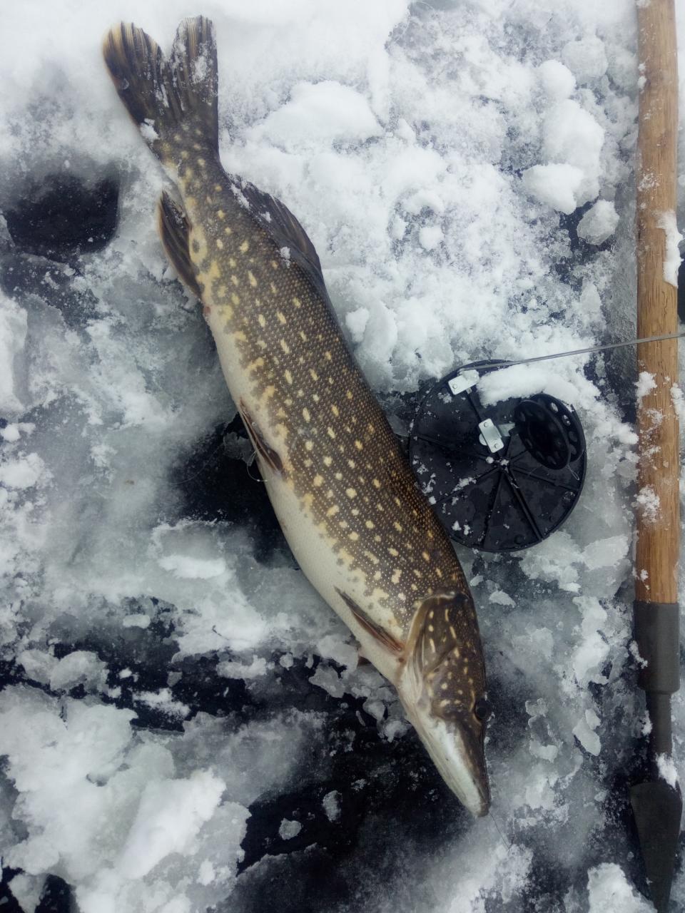 Отчет за вчерашний день,опять разливы и канал.Зарядил оставшегося ...   Отчеты о рыбалке в Беларуси