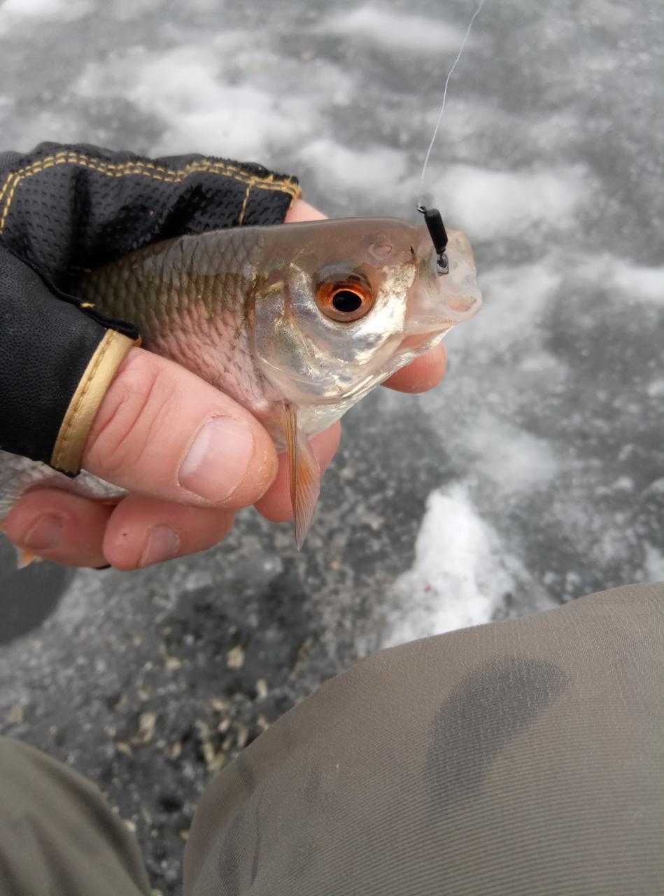 Открыл сегодня зимний сезон ловли плотвы, хотелось просто ... | Отчеты о рыбалке в Беларуси