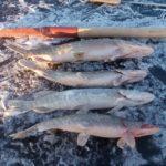 Уверен, что ВВ чуть ли не самый рыбный водоем в РБ