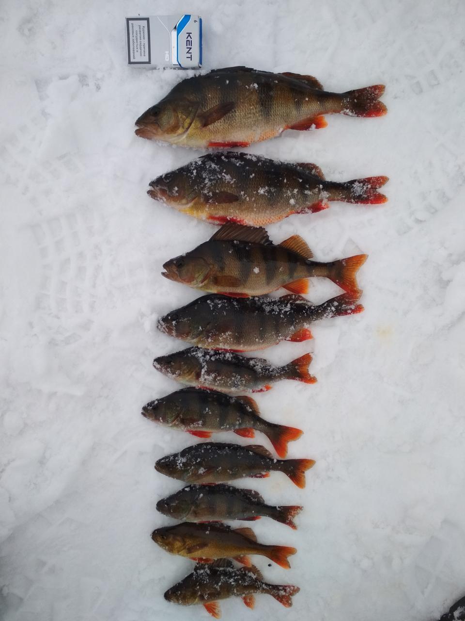 Побывал и я на картах сегодня.Поставили 10 ставок ... | Отчеты о рыбалке в Беларуси