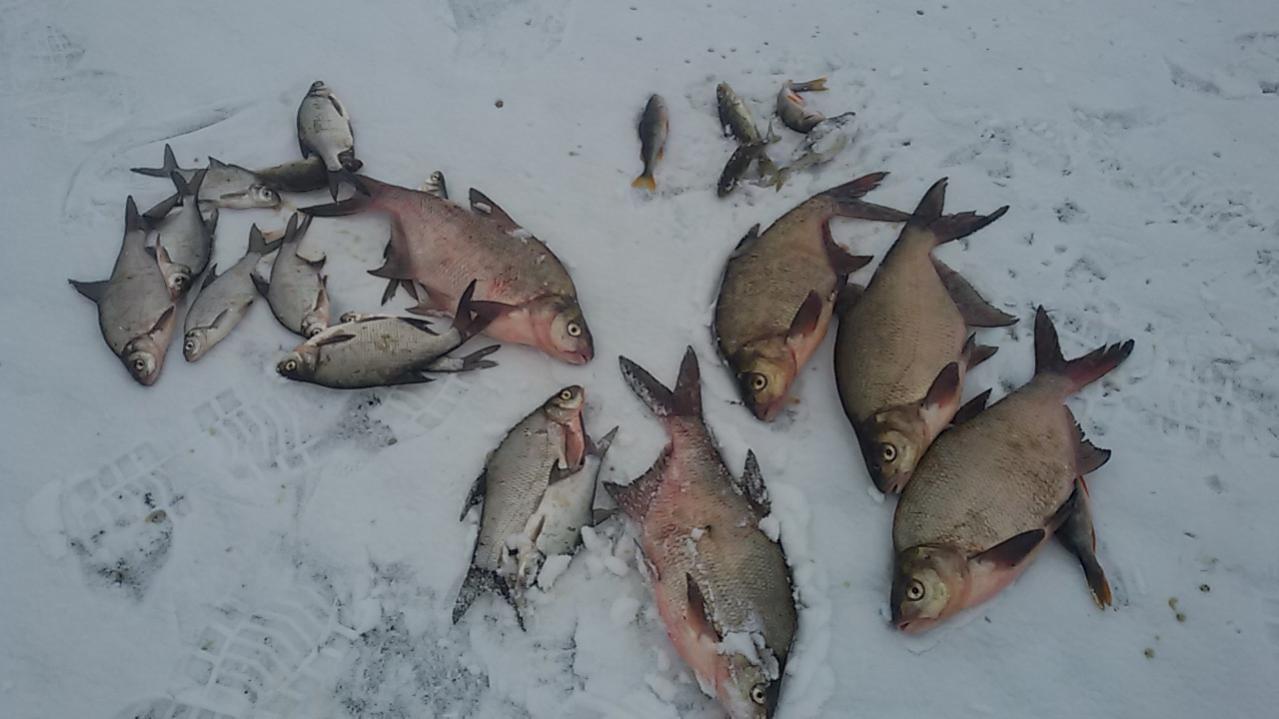 С 26 по 28 район Рабуни. Приехали с ...   Отчеты о рыбалке в Беларуси