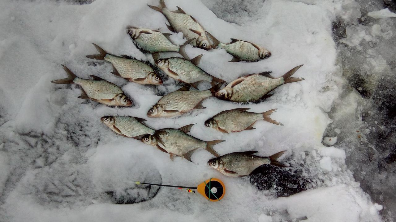 Сегодня был недалеко от водосброса.Глубина от 4 до ... | Отчеты о рыбалке в Беларуси