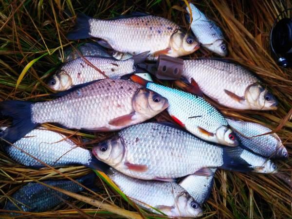 палатка для рыбалки в белоруссии