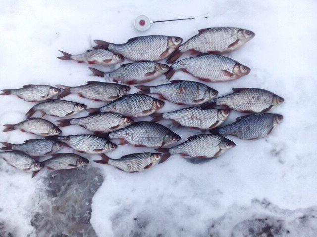 Суботта...машинка неспешно несёт меня к реке ... | Отчеты о рыбалке в Беларуси