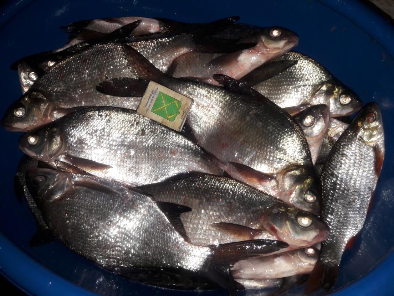 Всем добрый вечер)Вторая попытка оказалось более удачной, чем ... | Отчеты о рыбалке в Беларуси