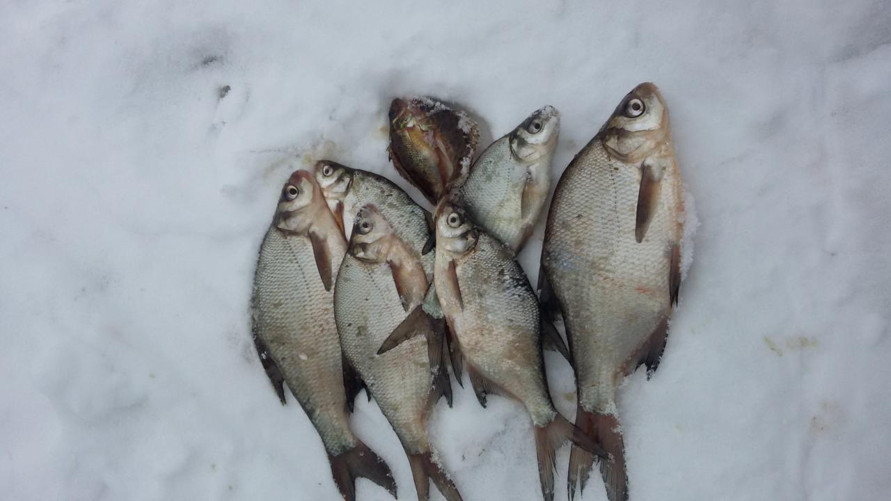 Был вчера, искал активную рыбку безмотылкой. Прошел с ... | Отчеты о рыбалке в Беларуси