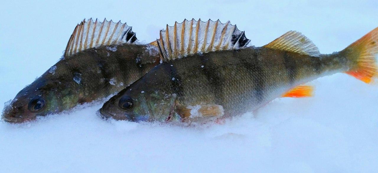 ДА ,снежку накидало , тестили самодельную камеру поэтому ... | Отчеты о рыбалке в Беларуси