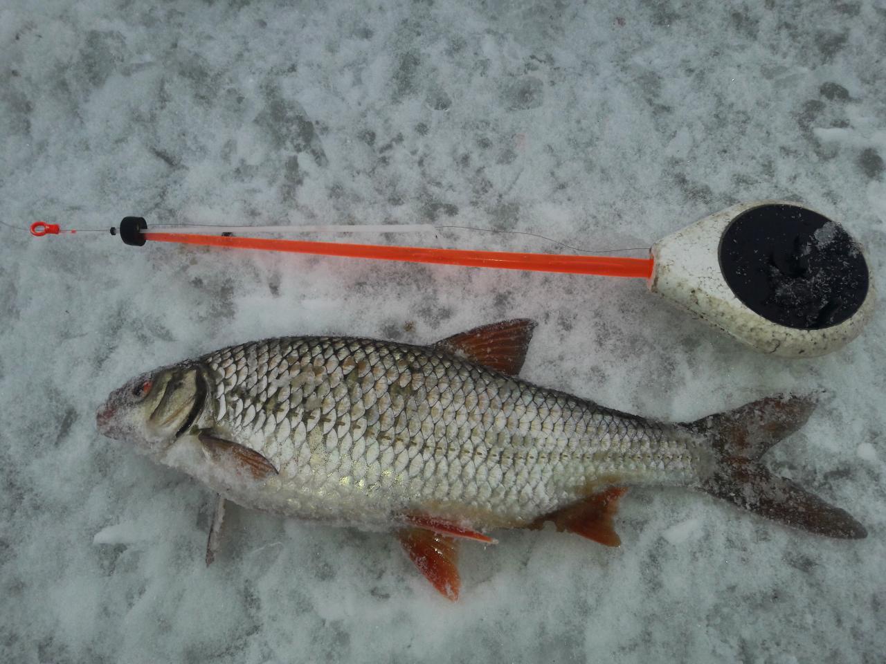 Добрый вечер!Сегодня (8.02) снова посетил оз.Дривяты !) Утром ... | Отчеты о рыбалке в Беларуси