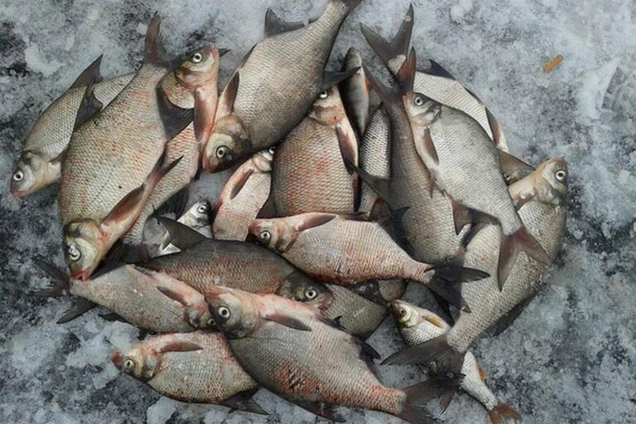 ...клюет вчера и завтра - поэтому сегодня не ... | Отчеты о рыбалке в Беларуси