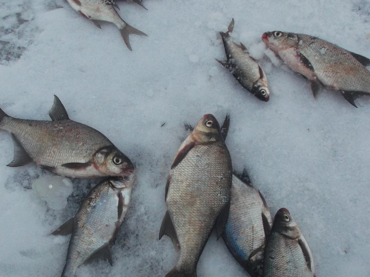 люблю понедельник ,особенно на Луково. но сегодня по ... | Отчеты о рыбалке в Беларуси