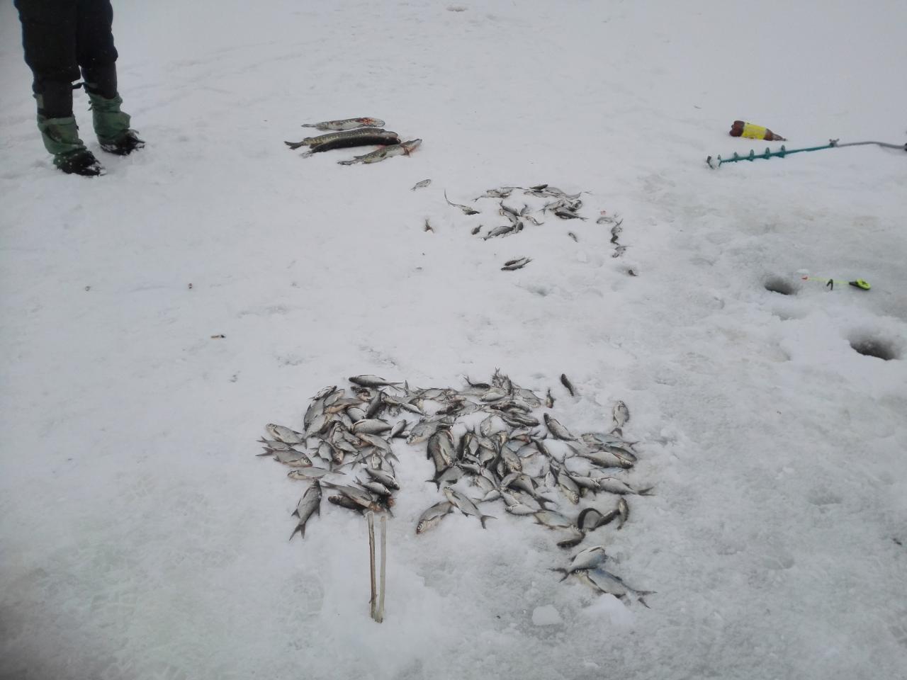 Оживим ветку... Сегодня посетили новый для себя водоём ... | Отчеты о рыбалке в Беларуси