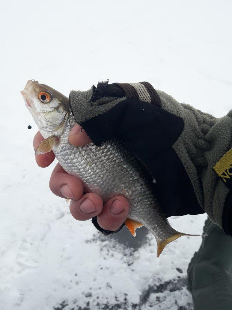 Сегодня решил рискнуть и отправился на пятый пляж ... | Отчеты о рыбалке в Беларуси