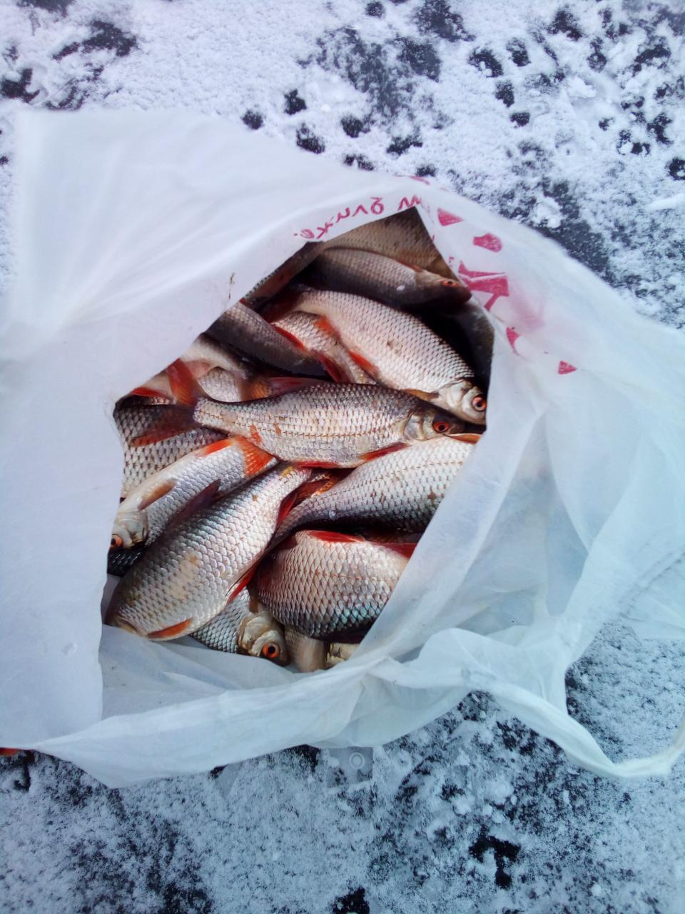Хороший погодный прогноз на сегодня полностью подтвердился ,а ... | Отчеты о рыбалке в Беларуси