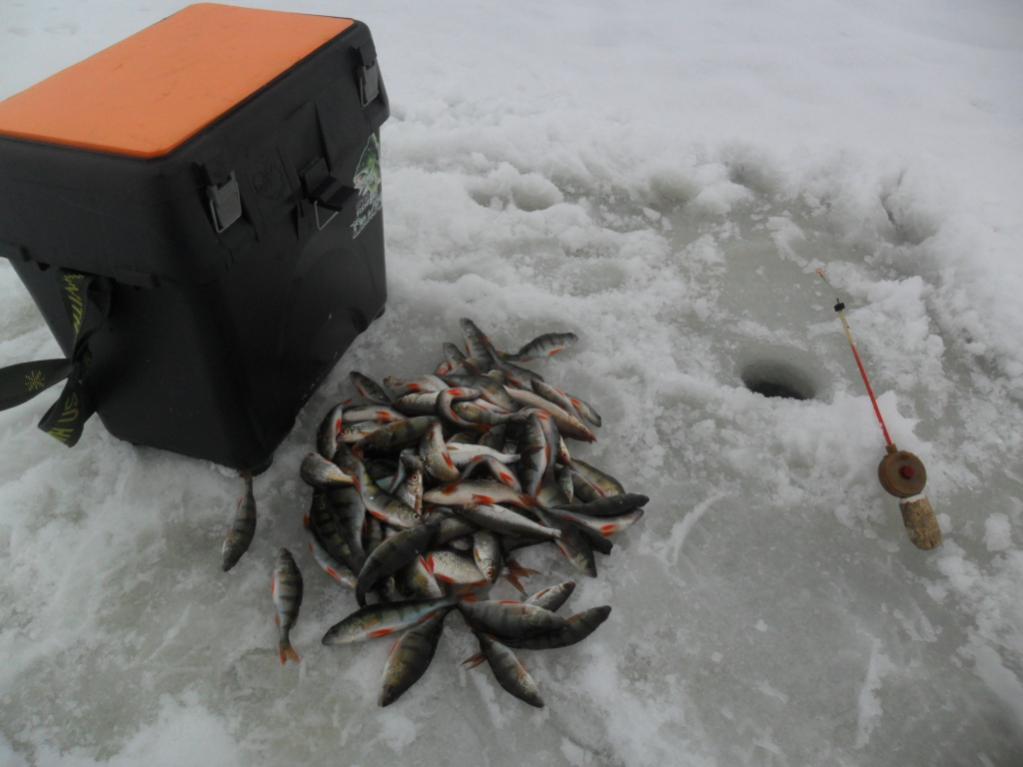 Был на Дривятах 10 (целый день) и 11 ... | Отчеты о рыбалке в Беларуси