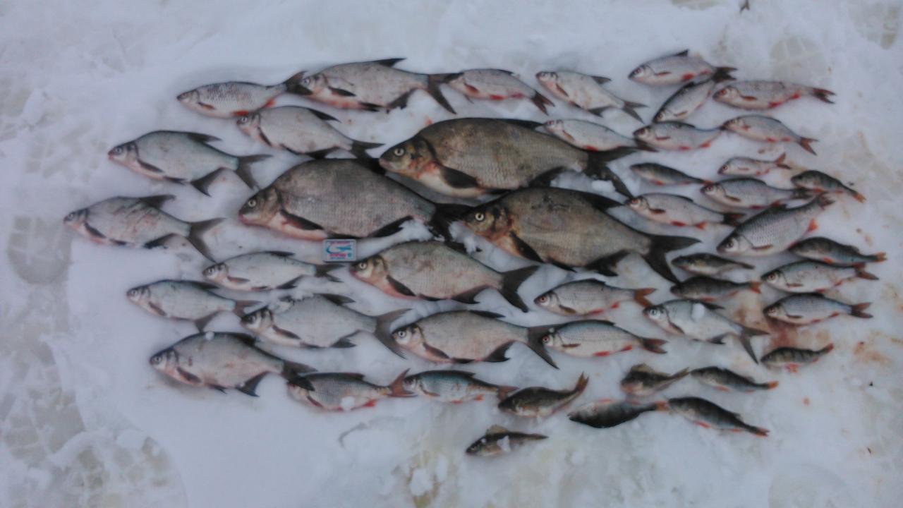 Был с 8 по 9 число. Матчицы. Глубина ... | Отчеты о рыбалке в Беларуси