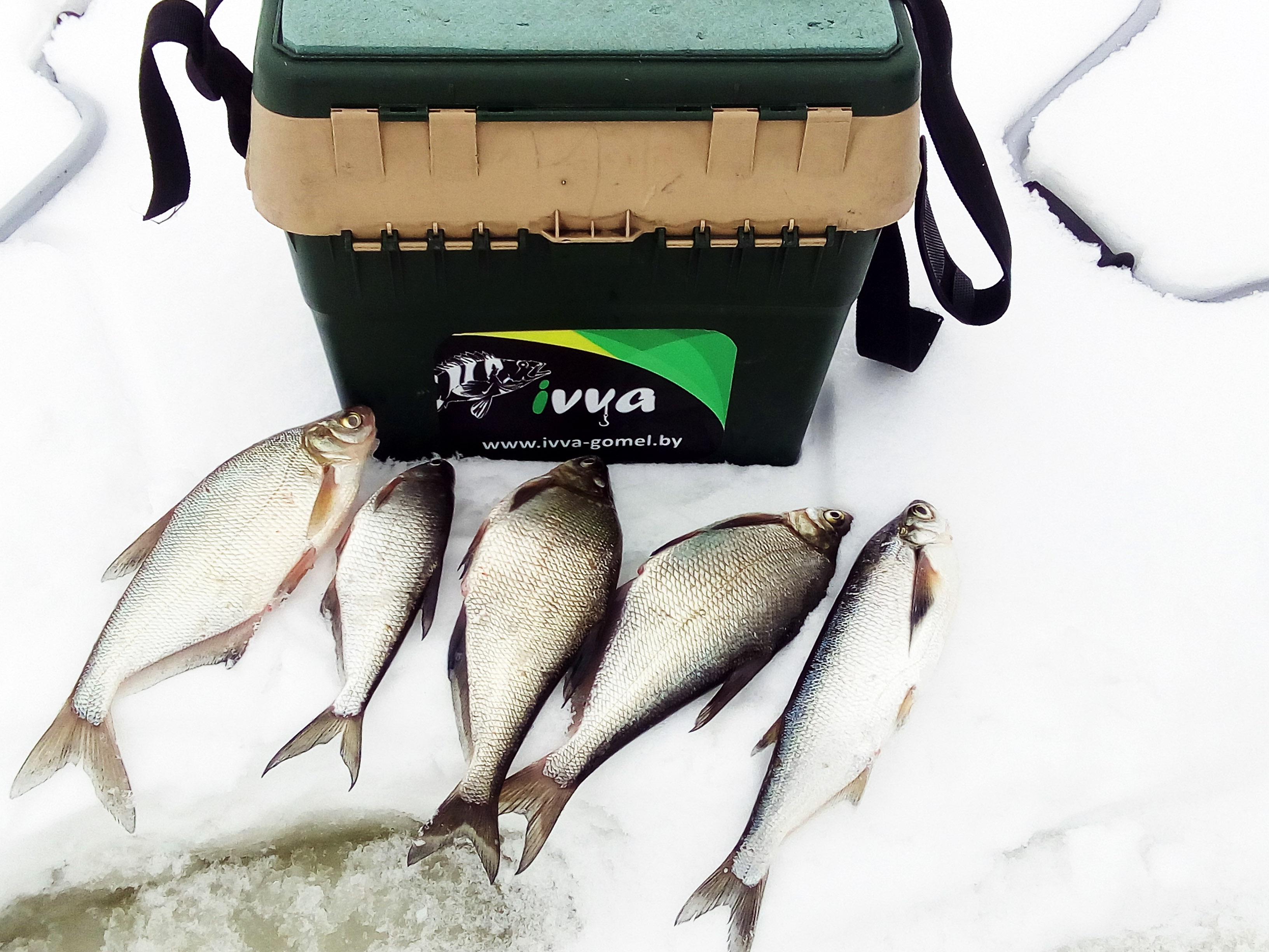 Были сегодня на заливе Сожа. Водоем интересный ... | Отчеты о рыбалке в Беларуси