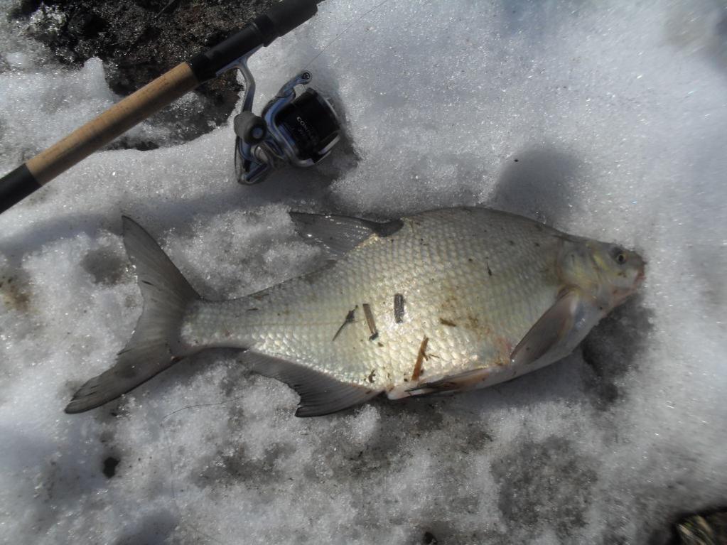 сегодня. с 11-ти до 18-ти.две поклевки-две рыбы(отпущены).Пикер 2.7м+катушка ...   Отчеты о рыбалке в Беларуси