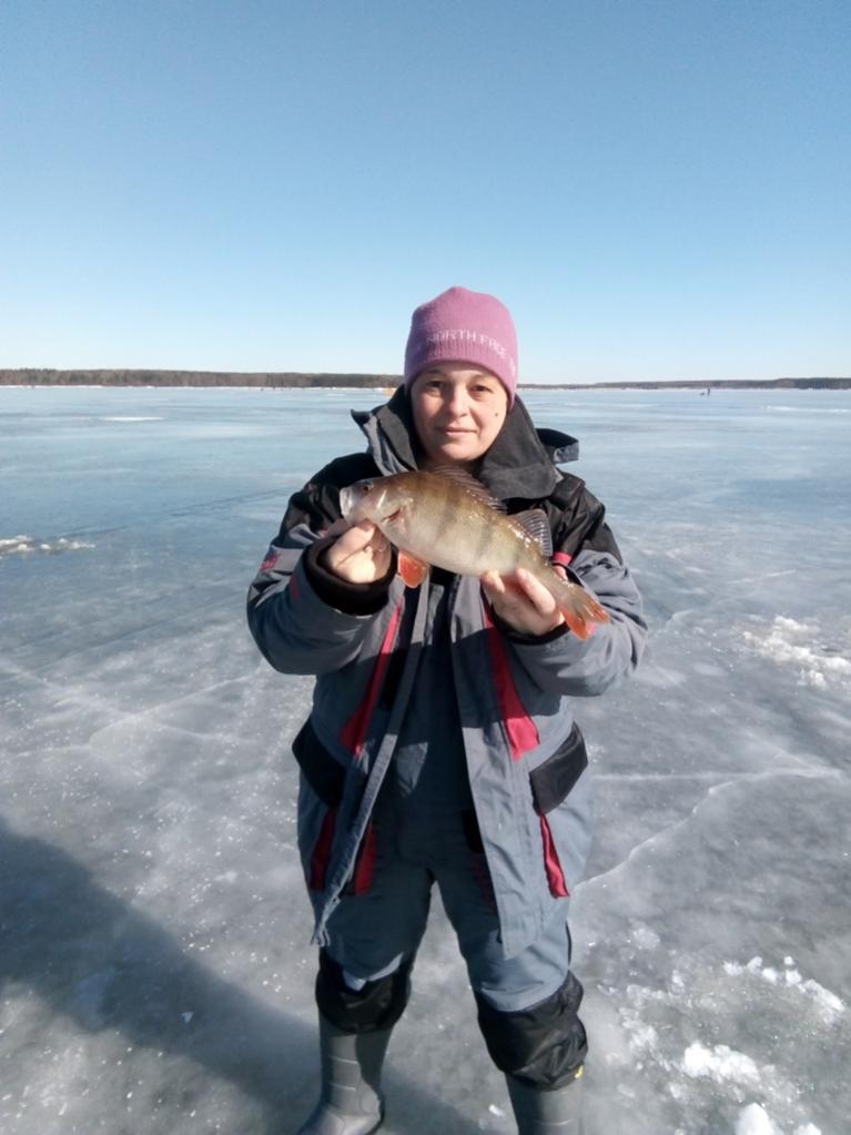 Сегодня выбрались с Наташей поискать окуня. Заезжали через ... | Отчеты о рыбалке в Беларуси