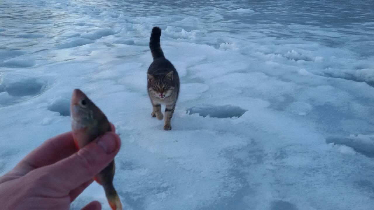 Сегодня,не выдержал,поехал опять на свою лунку, в 11 ... | Отчеты о рыбалке в Беларуси