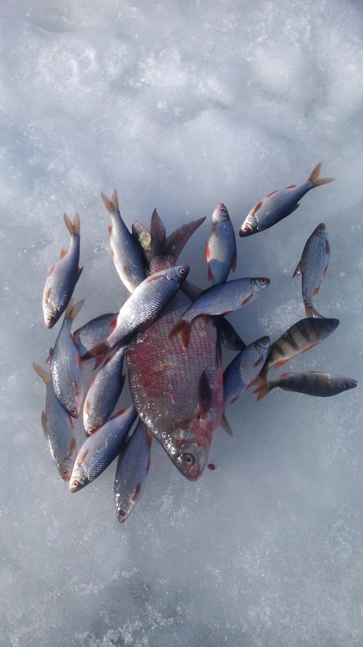 среду и четверг посветил прогулкам по свежему воздуху ... | Отчеты о рыбалке в Беларуси