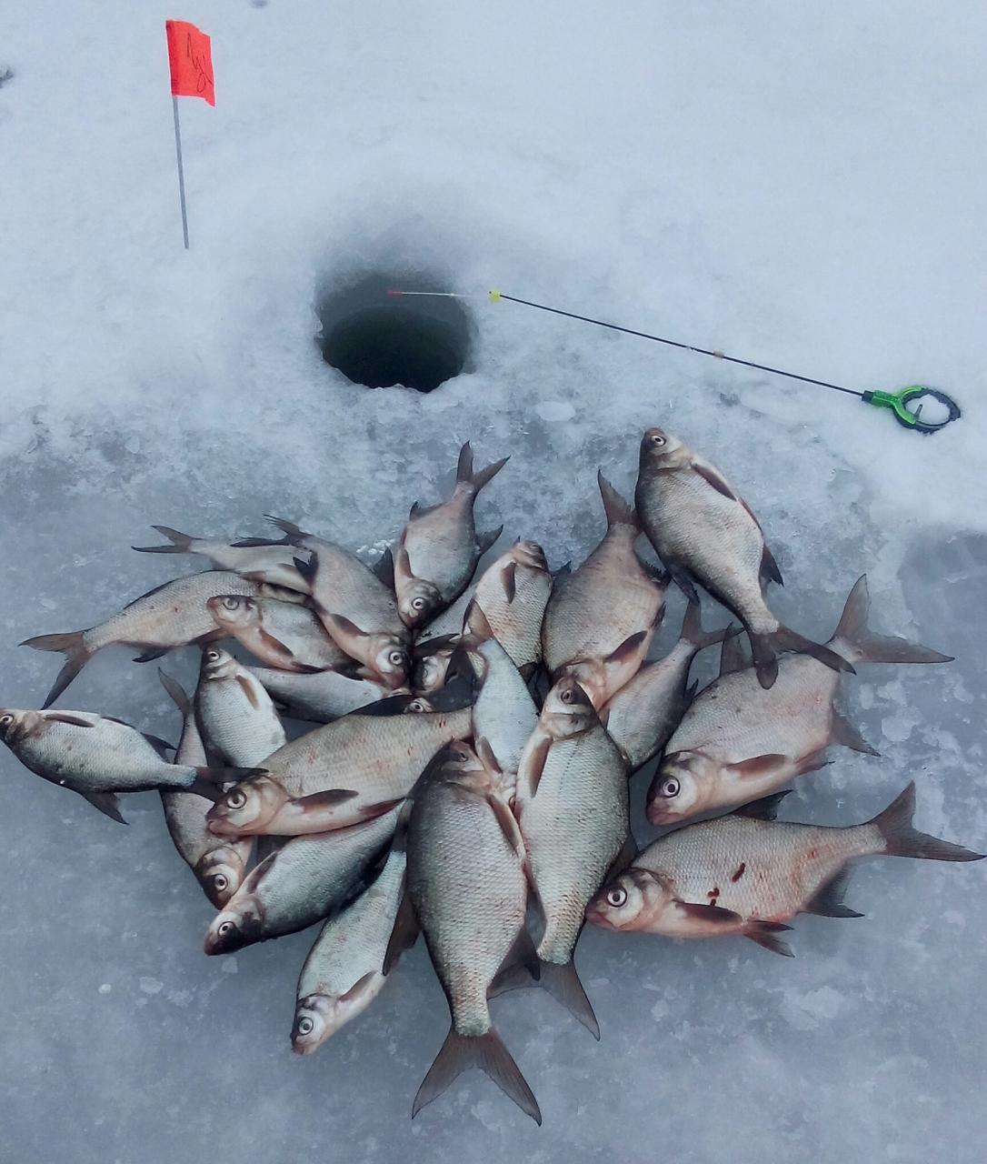 31 марта 2018 г. ( суббота ) :...Каждый ... | Отчеты о рыбалке в Беларуси