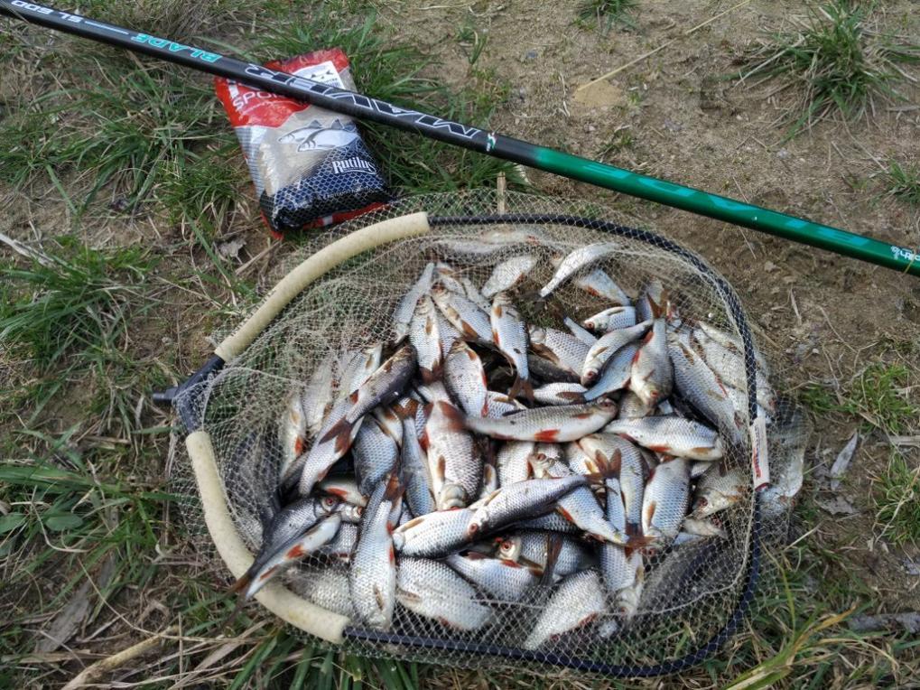 Был 18.04 опять на Пралеске.Рыбаков пару человек, на ...   Отчеты о рыбалке в Беларуси
