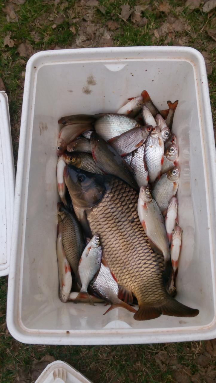 В эти выходные не поехал из-за сильного ветра,а ... | Отчеты о рыбалке в Беларуси