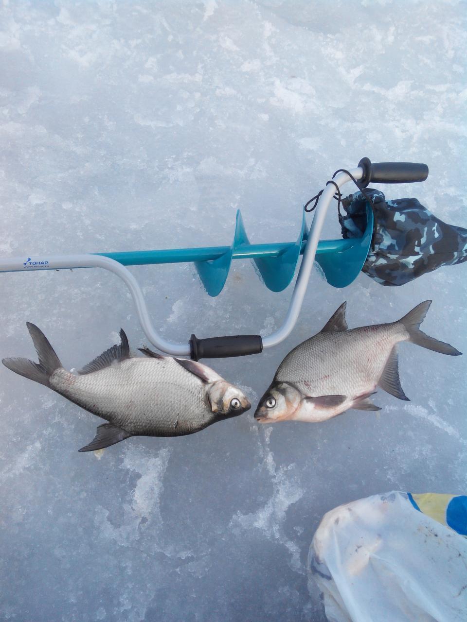 В субботу хотел рвануть на ЛЭП но там ... | Отчеты о рыбалке в Беларуси