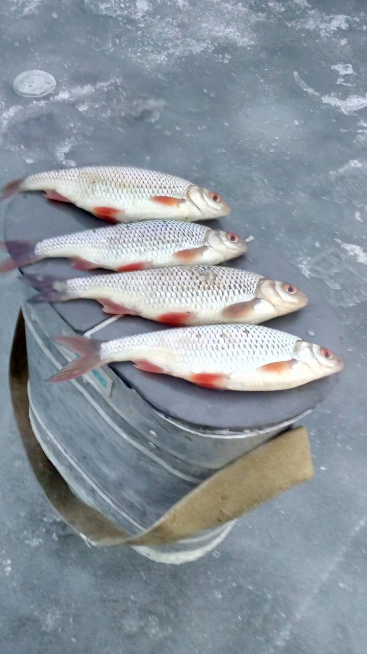 Вчера закрывались с друзьями на моих сотках.Устроили соревнование ... | Отчеты о рыбалке в Беларуси