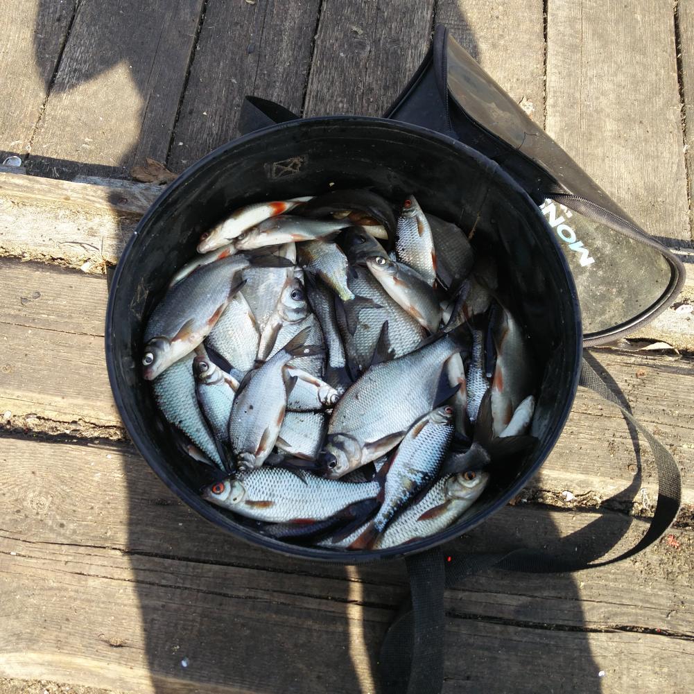 Всем доброго времени сутокВ воскресенье ездил порыбачить на ... | Отчеты о рыбалке в Беларуси