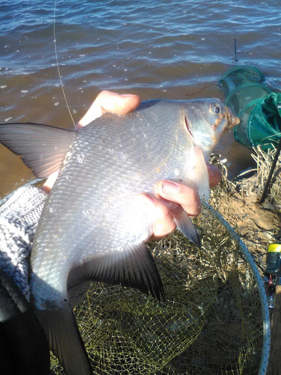Всем привет! рыбачили с товарищем в субботу в ... | Отчеты о рыбалке в Беларуси