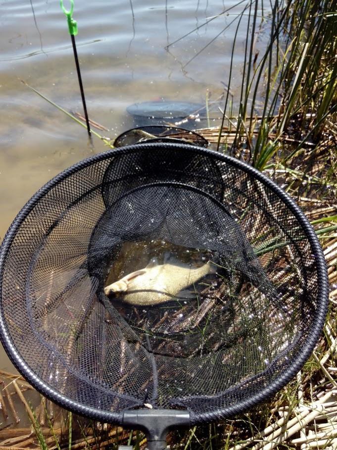 Был с утра часов до 16...Планировал к рассвету ... | Отчеты о рыбалке в Беларуси