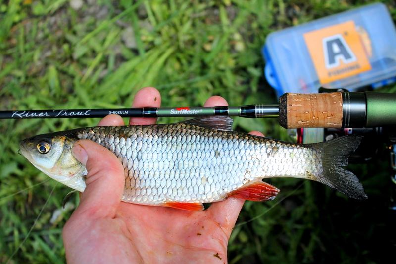 Это он... То тут, то там раздаются всплески... | Отчеты о рыбалке в Беларуси