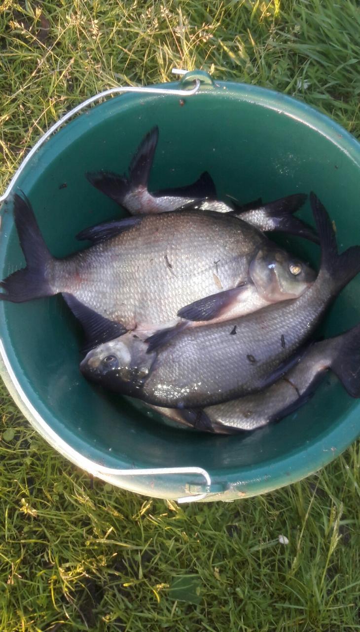 Не хотелось скептиков расстраивать, таки на ВВ рыба есть