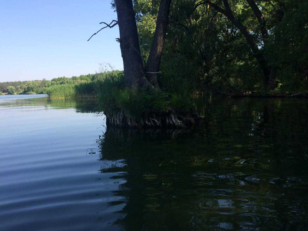 Вчера с самого утра вдвоём с приятелем Юрой сгоняли на оз. Белое ...   Отчеты о рыбалке в Беларуси