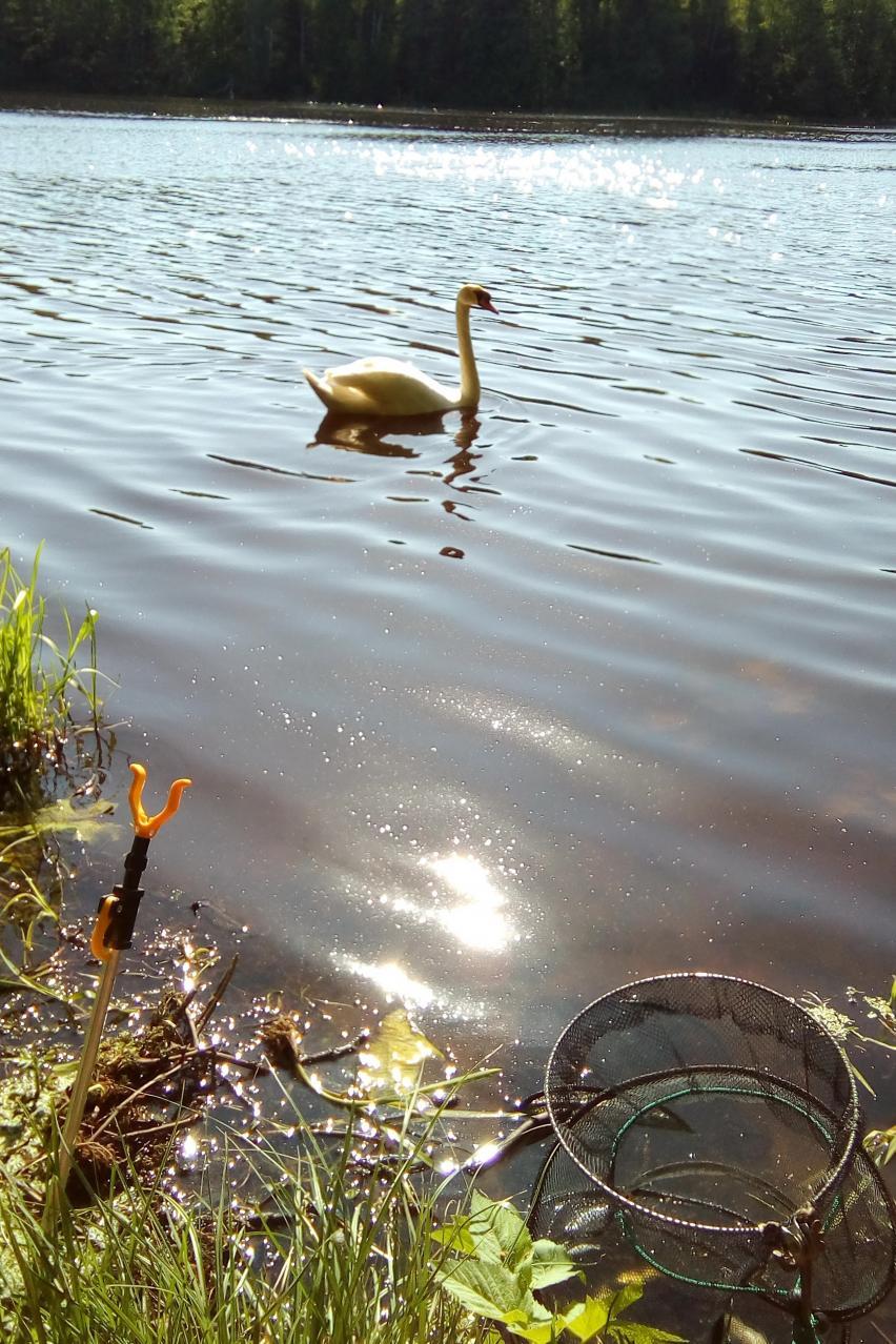 Посетили с другом вчера Лапичи с фидерами.Погода в ...   Отчеты о рыбалке в Беларуси