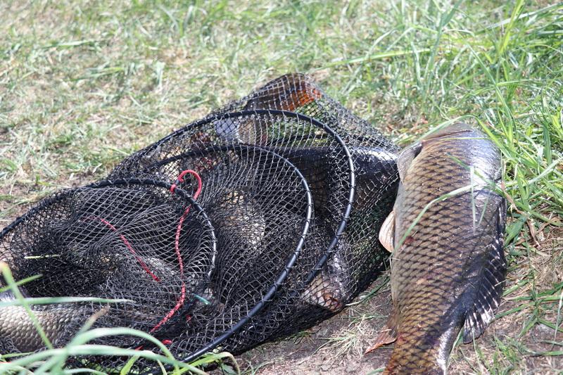 Рыбхоз Хотово - элитная ловля карпа и амура в Минской области ... | Отчеты о рыбалке в Беларуси