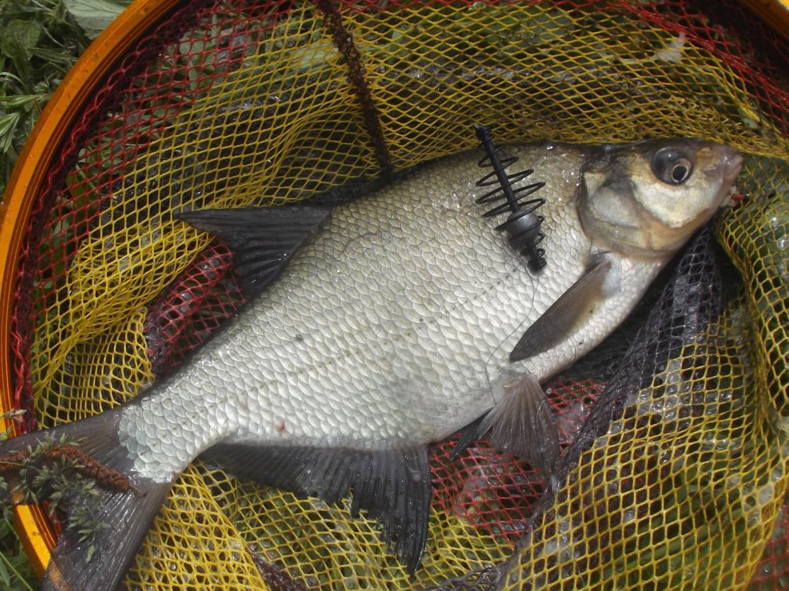 снова выше бульковской плотины.на этот раз у рыбов ... | Отчеты о рыбалке в Беларуси