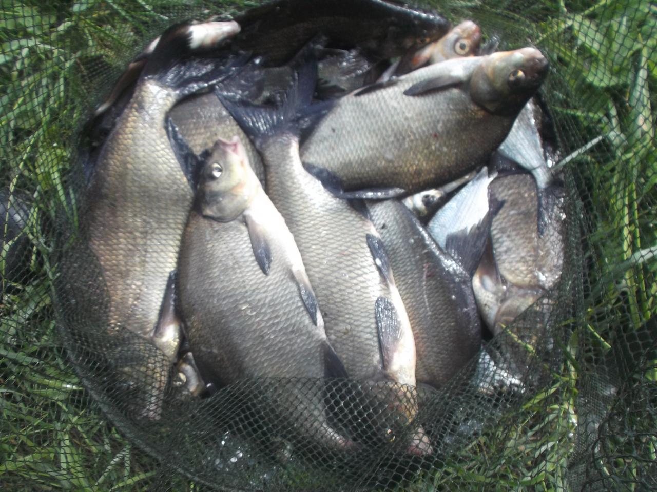так называемая Бульковская плотина-это шлюз Новосады. поехал вчера ... | Отчеты о рыбалке в Беларуси