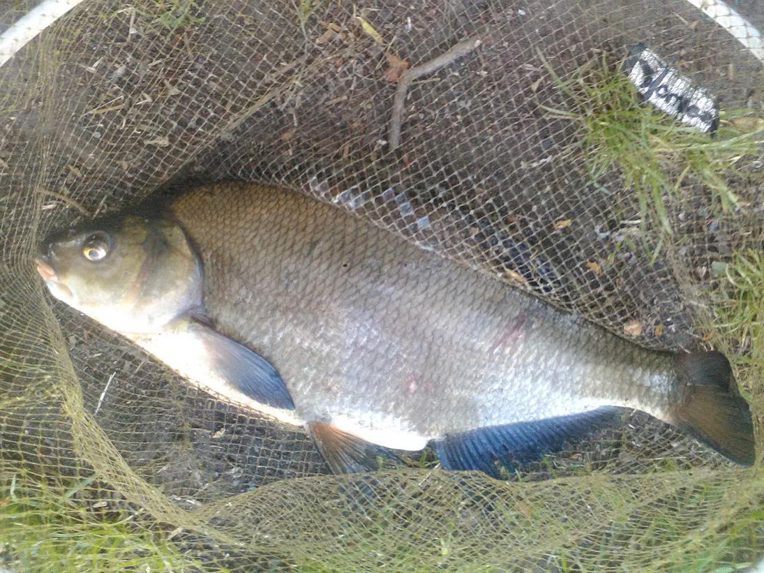 В воскресенье выбралсяполовить ) несмотря на то что ... | Отчеты о рыбалке в Беларуси