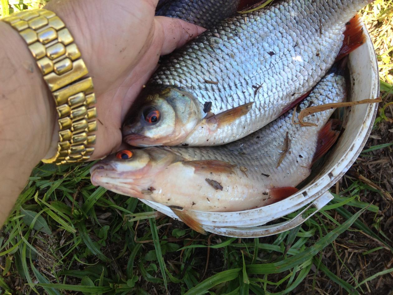 Вчера решили проехать за плотвой.Сегодня в 5-45 были ... | Отчеты о рыбалке в Беларуси