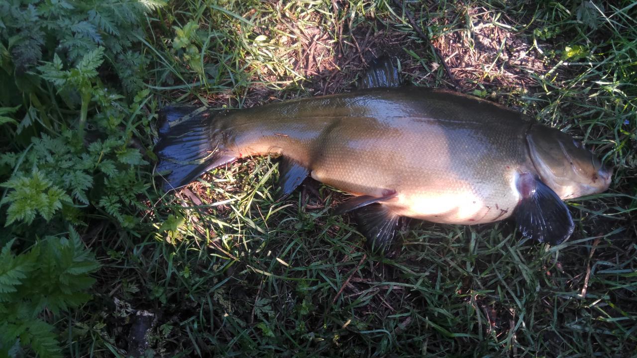 Вчера с утра одна поклевка, немного возни и ...   Отчеты о рыбалке в Беларуси