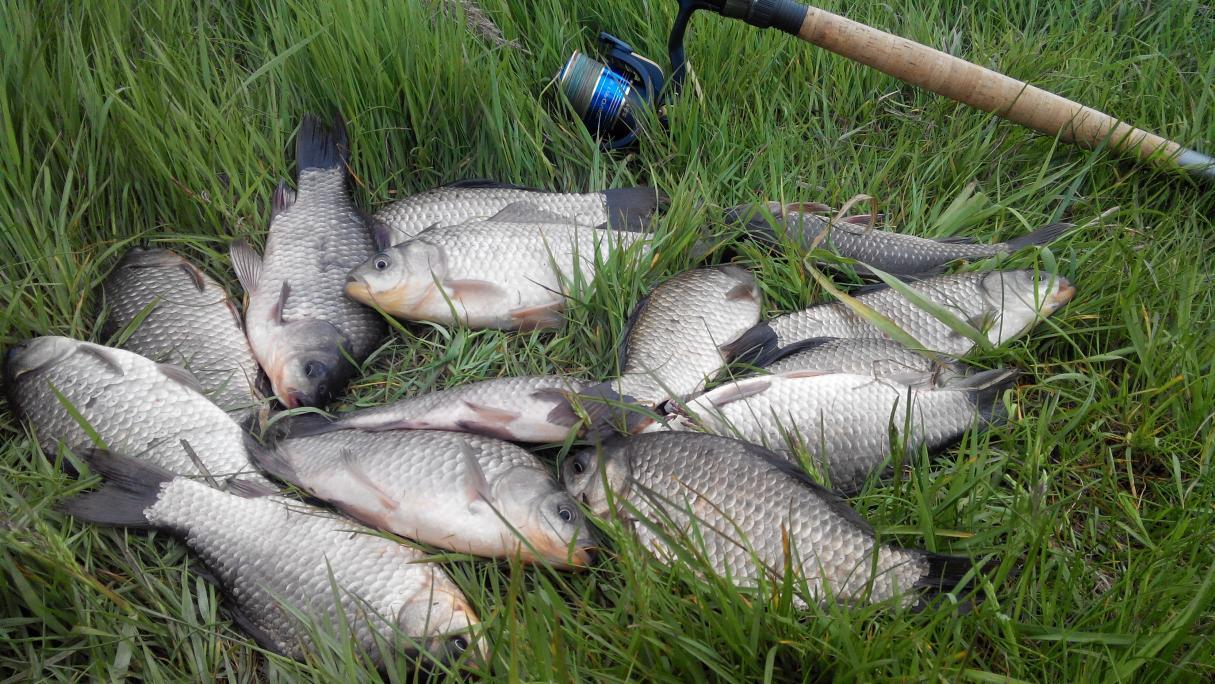 Вчера снова посетил Койданово. Ловил на том же ... | Отчеты о рыбалке в Беларуси
